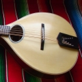 10 string mandocello